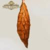 true fronto leaf